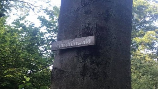 Teaser Maerchenwald